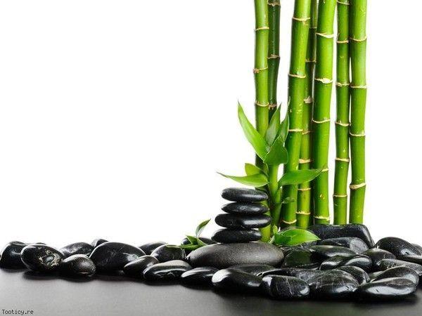 Zen attitude - Salon toilettage zen attitude ...