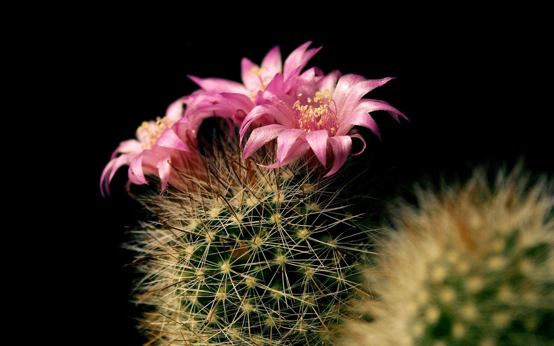 Fleur Originale